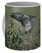White-tailed Hawks At Nest Coffee Mug