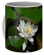 White Waterlily Lotus Coffee Mug