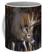 White-tailed Deer Antler Shadow Coffee Mug
