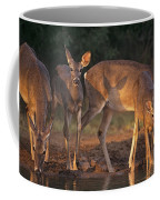 Whitetail Deer At Waterhole Texas Coffee Mug