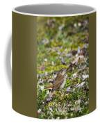 Wild Birds Hermit Thrush Coffee Mug