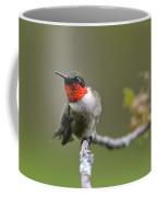 Wild Birds - Ruby-throated Hummingbird Coffee Mug by Christina Rollo