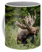 Wild Bull Moose Coffee Mug