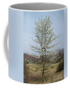 Wild Cherry Tree In Spring Bloom Coffee Mug