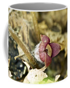 Wild Ginger Wildflower - Asarum Canadense Coffee Mug