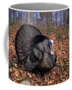 Wild Turkey Displaying Coffee Mug
