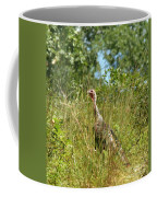 Wild Turkey In The Sun Coffee Mug