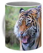 Wildcat IIi Coffee Mug
