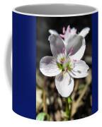 Wildflower Sun Worship Coffee Mug