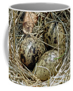 Willet Catoptrophorus Semipalmatus Eggs Coffee Mug