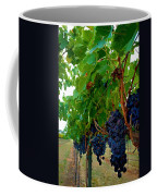Wine Grapes On The Vine Coffee Mug