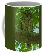 Winter Park Owl Coffee Mug