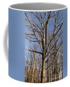 Winter White Oak Coffee Mug