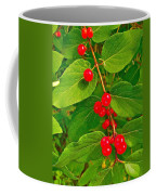 Winterberry Along Rivier Du Nord Trail In The Laurentians-qc Coffee Mug