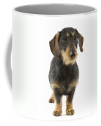 Wire-haired Dachshund Coffee Mug