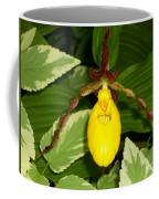 Wisconsin Yellow Lady Slipper Coffee Mug