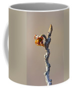 Witch Hazel Springtime Twig - Hamamelis Coffee Mug