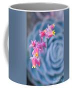 with affection - Echeveria glauca Coffee Mug