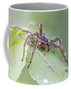 Wolf Spider In Dew  Coffee Mug