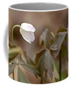 Wood Anemone Wildflower - Anemone Quinquefolia L.  Coffee Mug