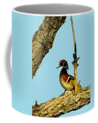 Wood Duck Drake In Tree Coffee Mug