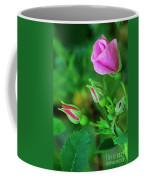 Wood Rose Buds Rosa Woodsii Wild Coffee Mug