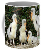 Wood Stork Young In Nest Coffee Mug