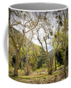 Woodland Glen In The California Vallecito Mountains Coffee Mug