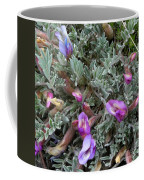 Woolly-pod Locoweed Closeup Coffee Mug