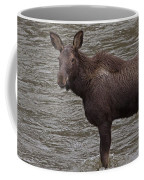 Yearling Moose In The Shoshone River   #1284 Coffee Mug