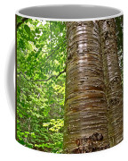 Yellow Birch Near La Chute In Forillon Np-qc Coffee Mug
