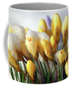 Yellow Crocuses In The Snow Coffee Mug