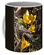 Yellow Crocuses Coffee Mug