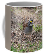 Yellow Crowned Sparrow Coffee Mug