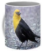 4m09157-02-yellow Headed Blackbird Coffee Mug