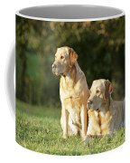 Yellow Labrador Retrievers Coffee Mug