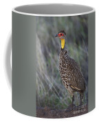 Yellow-necked Francolin... Coffee Mug