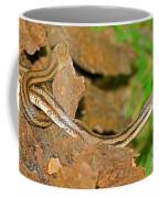 Yellow Rat Snakes Coffee Mug