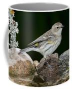 Yellow-rumped Warbler Hen Coffee Mug