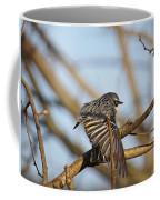 Yellow-rumped Warbler Coffee Mug