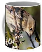 Yellow-rumped Warbler - Precious Coffee Mug