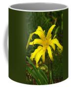 Yellow Spider Lily 21 Coffee Mug