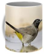 Yellow-vented Bulbul Pycnonotus Xanthopygos Coffee Mug