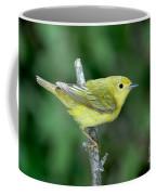 Yellow Warbler Dendroica Petechia Female Coffee Mug