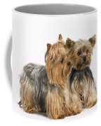 Yorkshire Terrier Dogs Coffee Mug