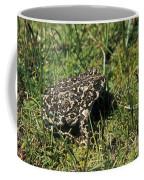 Yosemite Toad Bufo Canorus Coffee Mug