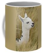 Young Alpaca Coffee Mug