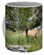Young Bull Elk - Yellowstone National Park - Wyoming Coffee Mug