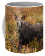 Young Bull Moose Being Aggressive Coffee Mug