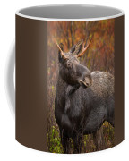 Young Bull Moose Coffee Mug